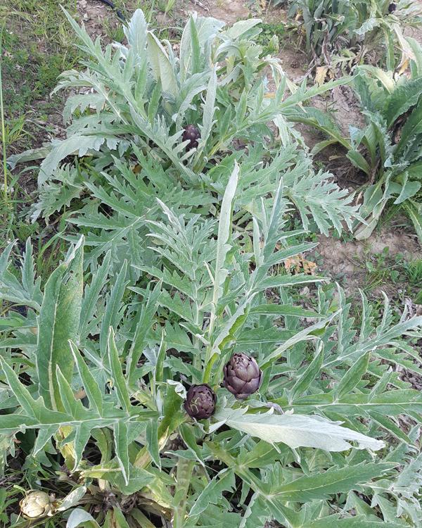 bio-vegetable-01