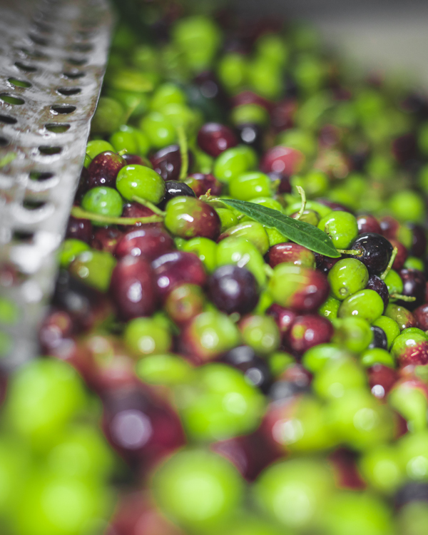 tuscan-olive-oil04